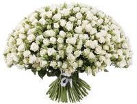 55 кустовых роз